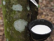 Indonesia cuts natural rubber exports
