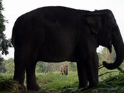 Thailand: PM calls on Thais to protect elephants