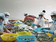 Duties on Vietnamese shrimp sent to US increased
