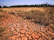 Crippling drought continues in Central, South: experts
