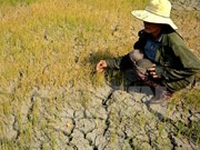 Gia Lai: 14,000 drought-hit households face food shortage