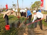 HCM City: 480 billion VND spent on greening