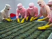 Prawn export sees increase in first quarter