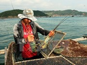 Lobster farming to become key economic sector in central region