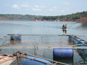 Thua Thien-Hue: aid given to fishermen affected by unusual fish death