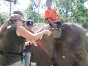 50,000 USD to save elephants in Dak Lak