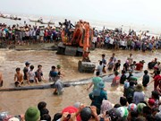 15-tonne whale rescued in Nghe An