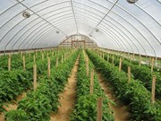Businesses' engagement needed for agricultural production