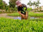 Da Nang strives for 45 percent forest coverage