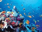 Marine biodiversity conservation needs master plan