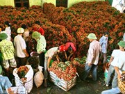 Agricultural sector focuses on recovering growth