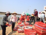 Ha Tinh offers temporary support to residents hit by mass fish deaths