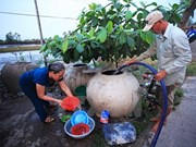 Mekong Delta seeks solutions to saltwater intrusion
