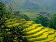 Lao Cai's new destinations increasingly attractive to tourists