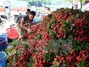Australia – potential market for Vietnam's fruit, vegetable