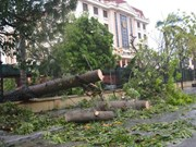 Trees uprooted by typhoon Mirinae