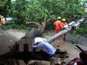 Northern localities surmount disaster consequences