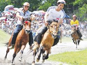 Vietnam fine-tunes rules on horse racing, int'l football betting