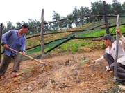 Dong Thap takes measures to prevent erosion