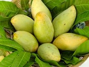 US to open door for Vietnamese mangoes