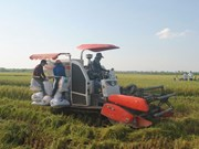 Phu Tho province works to promote sustainable agriculture
