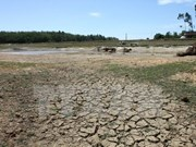 Financial incentives proposed for devastated farmers