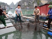 Seafood farming needs technological reform