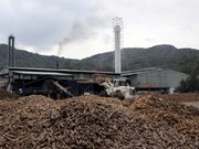 Vietnam's cassava exports up 26 percent