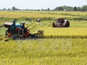 Mekong Delta seeks climate change adaptive techniques for rice farming