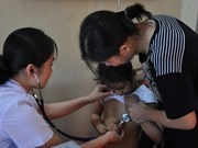 Over 1,500 children get free heart checks in Gia Lai