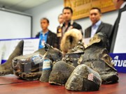 Customs sector calls for joint efforts against wildlife trafficking