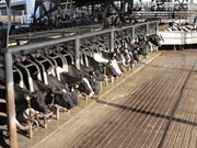 Indonesia normalises live cattle imports from Australia