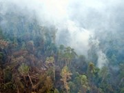Indonesia spends millions of USD to stamp out forest fires