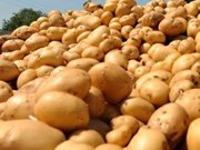 New Zealand to ship potatoes to Vietnam