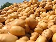 New Zealand to ship potatoes to Vietnam