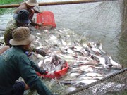 Vietnam holds potential for seafood