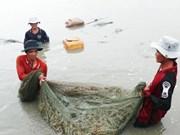 Ca Mau's seafood exports fall