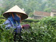 Tea festival attracts international participants