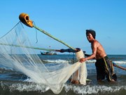 Ruoc netting season in central Quang Binh province