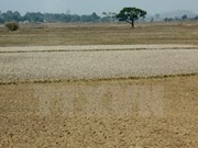 Maximum efforts to save Central Highlands from drought
