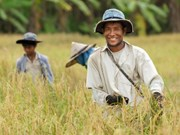 Thailand: rice cultivation zones to be narrowed