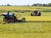 Vietnam's rice exports plunge