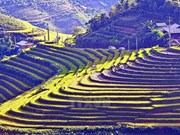 Lao Cai ramps up activities in preparation for 2017 Tourism Year