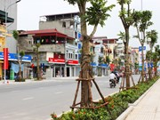 Hanoi to plant 45,000 trees along Thang Long Avenue