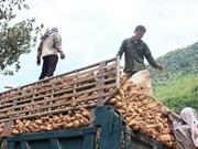 Cassava exports fall with China demand