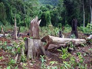 Ministry aims to restore, develop protect forests