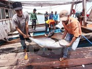 Fishery catching reaches 2.3 million tonnes in nine months
