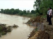Riverbank erosion affects livelihoods in Quang Nam