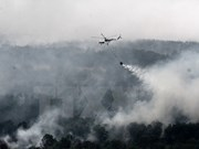 Malaysia, Indonesia hold dialogue on forest fires, haze pollution