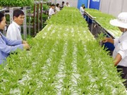 Ministry to promote agriculture investment